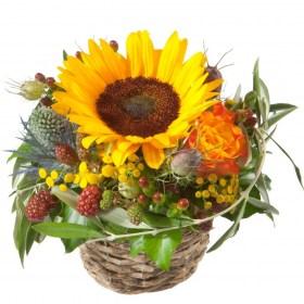 sunflower gartencenter öffnungszeiten