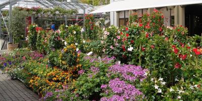 Wädenswiler Blumenmarkt
