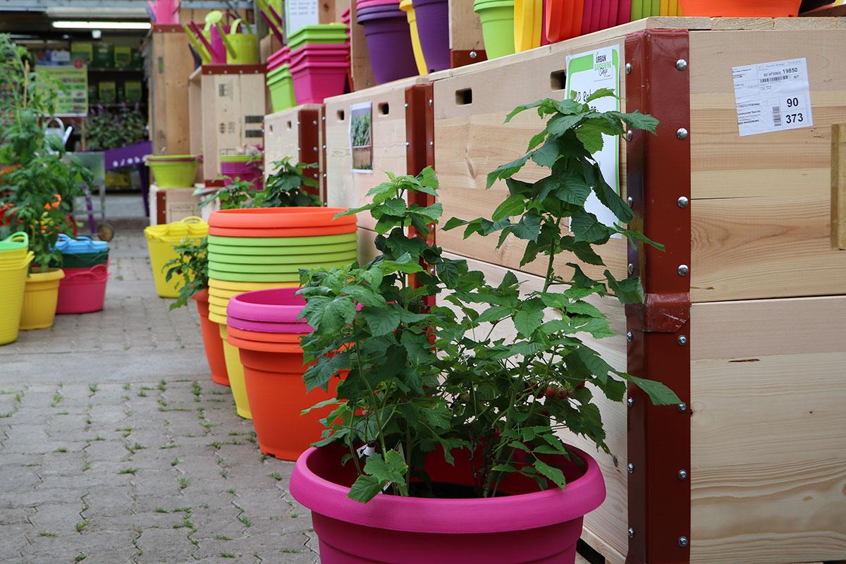 urban gardening raschle blumen pflanzen garten. Black Bedroom Furniture Sets. Home Design Ideas