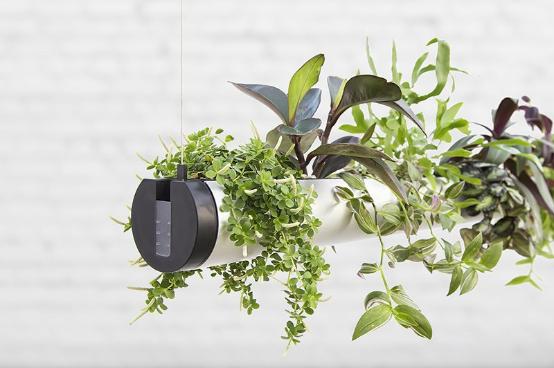 Pendularis Floating Indoor Garden