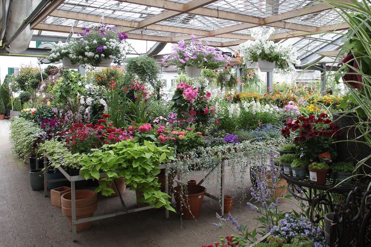 Ziemlich Indoor Garten Anlegen Geeignete Pflanzen Fotos - Die ...